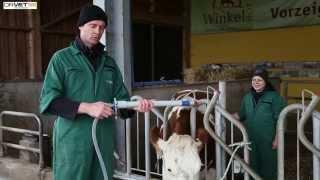 kuh-schonend-drenchen-dr-vet-die-tieraerzte-rinderpraxis