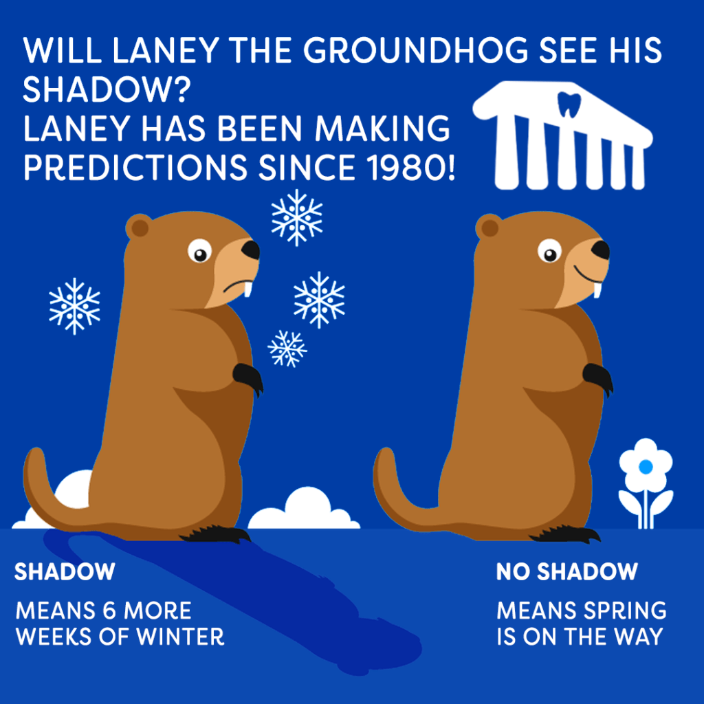 Groundhogs Amp Other Animals With Interesting Teeth