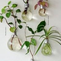 Us imagineu plantar un ficus a una bombeta?