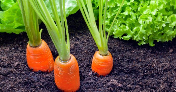 Cara Memulai Usaha Pertanian Bagi Pemula Agar Sukses Besar