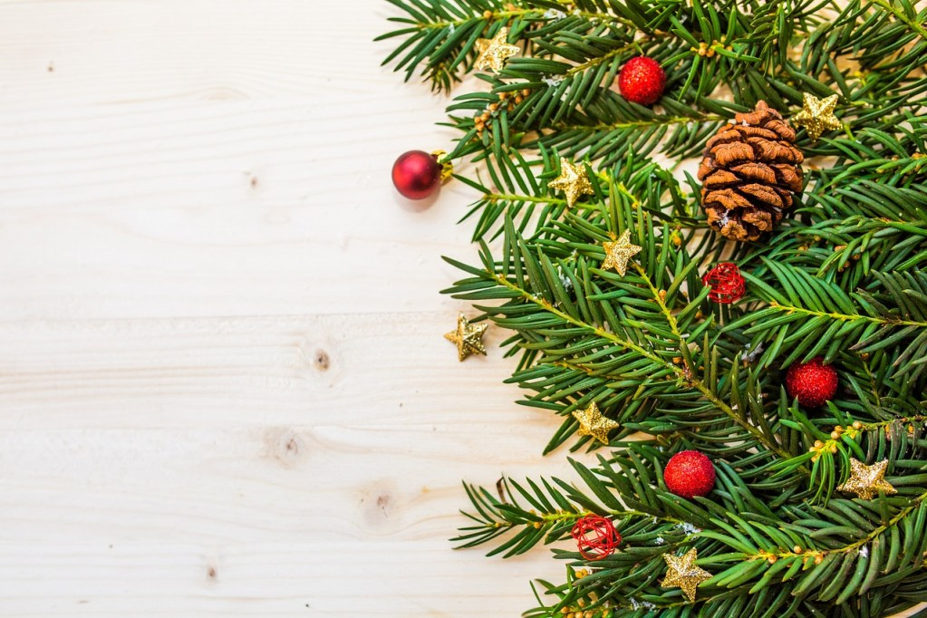 how to take care of your christmas tree langley experience