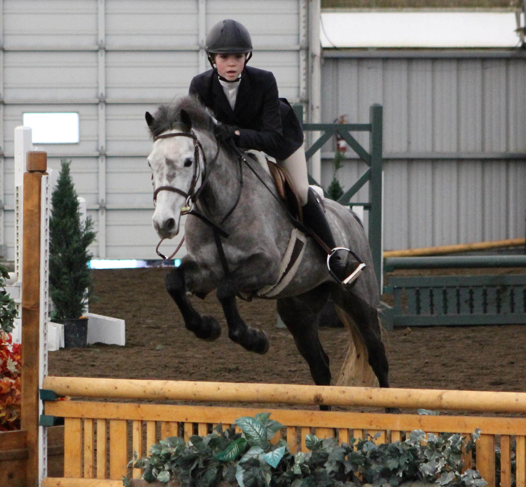 horse stables experience langley