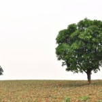 Medelstora och riktigt stora bolag – Beijer Alma och Berkshire Hathaway