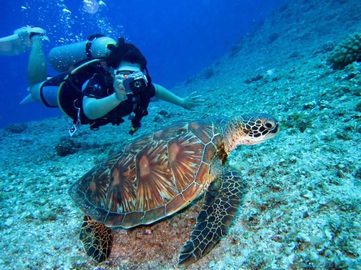 Image for E' vero che è stata scoperta una barriera corallina in Italia? Dove?
