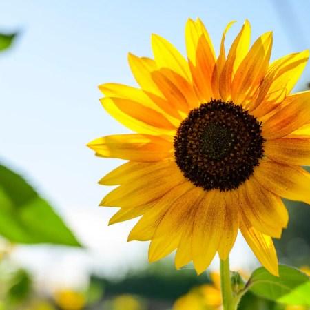 Per fare tutto ci vuole un fiore. Canzone e esercizio. (Italian level A2). 15