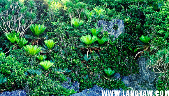 Vegetation that grows at a very steep incline, almost 90 degrees of a rock face