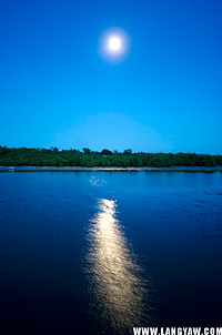 Mangroves separates the sea and sky as the reflection of the moon makes a bright streak in the water
