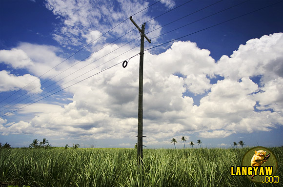 An electric post amidst the wide expanse of sugarcane fields that marks the landscape of northern Cebu, legacy of the sugar industry started during the second half of the 19th century when the province was one of the top suppliers of sugar during the Spanish colonization period.