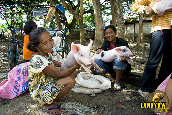 Market day in Dalaguete brings out produce and livestock from the surrounding barrios.