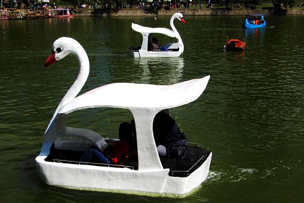 swans_baguio