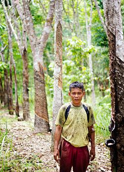 Rubber tree sap gatherer