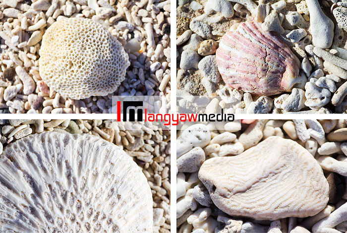 And beach combing but photographing the shells and bits of corals washed ashore