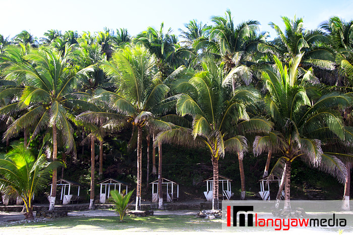 There's an eerieness in this grove of coconuts. The buildings under have long been abandoned
