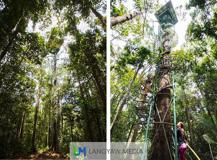 The approximately 120ft tall tree house, equivalent to a 7 storey building is up there at level with the trees