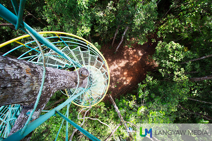 View from above with the spiral staircase of the tree house