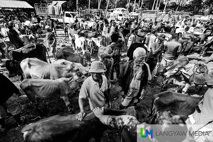 The Malatapay livestock market is one of the most popular markets in Negros Oriental and happens every Wednesday