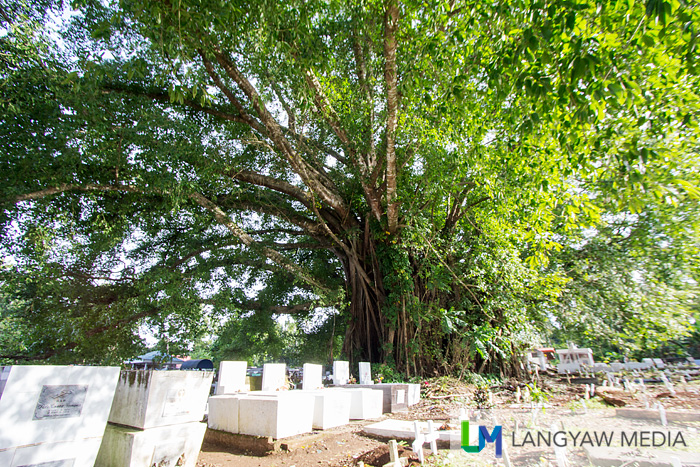 The huge balete tree as seen from the other side of the cemetery