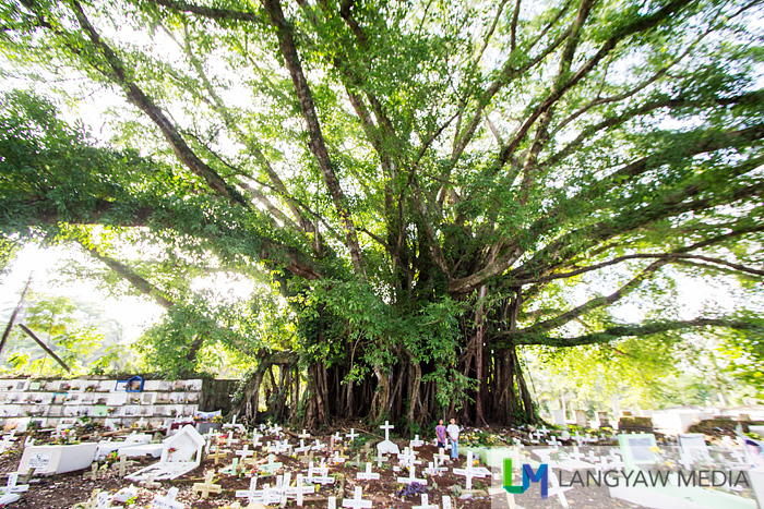 This is the creepiest balete tree I've ever seen! Can you spot the two girls? That's how big this tree is!