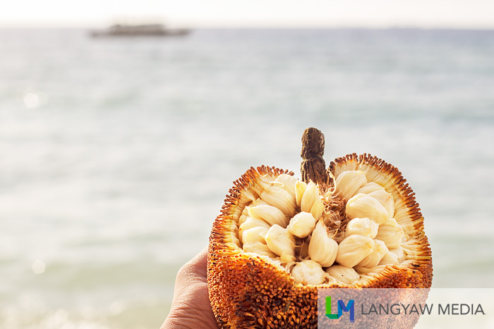 Eating marang by the beach