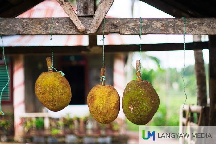 Marang fruits sold along the highway