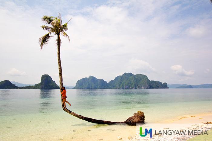 Pinagbuyutan's popular bent coconut tree where most tourists pose, like this girl