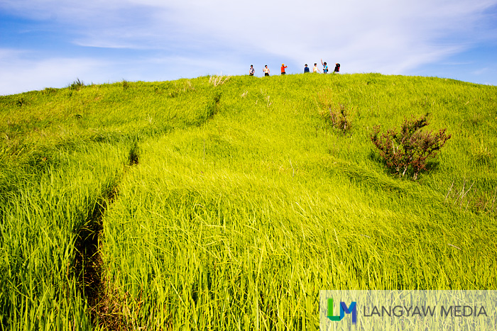 Atop the grassy slopes of Pitogo Island