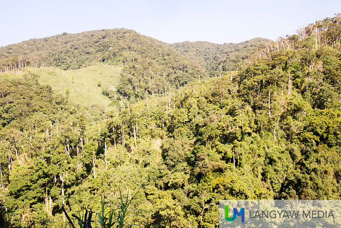 The lush forests of Tineg slowly being deforested