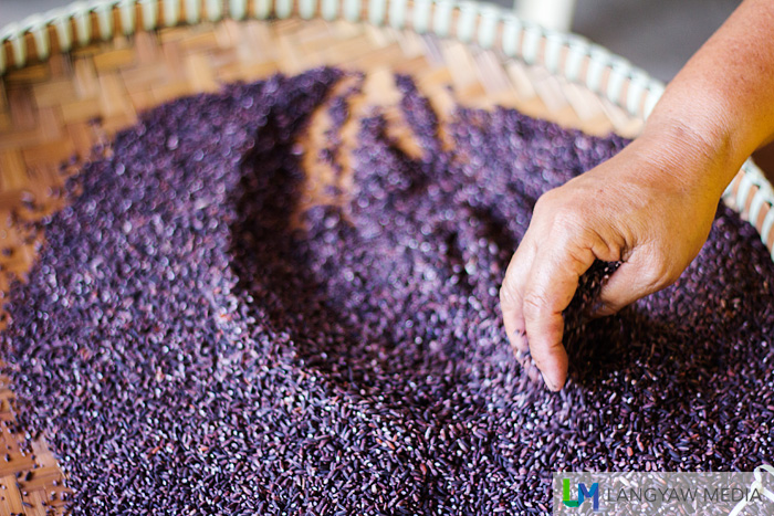 Sticky purple rice is being prepared.