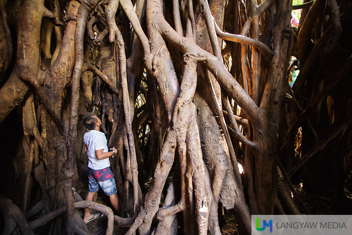 At the hollow interior of the balete tree