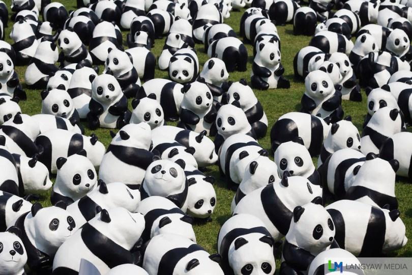 A massing of 1600 pandas