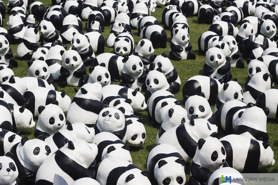 A massing of 1600 pandas