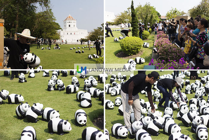 Stages of the panda 'invasion' from clear grounds to placing individual papier mache pandas