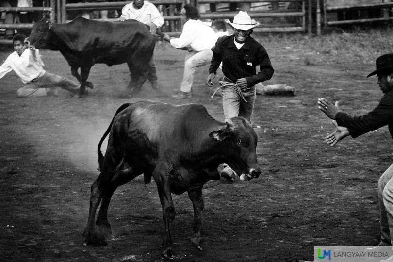 kaamulan-cowboys-14