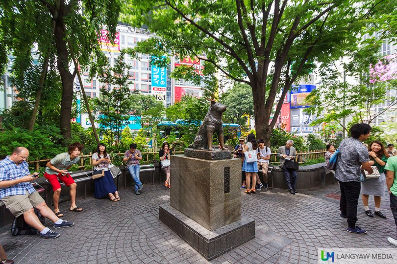 The famous bust of Hachiko in Shibuya is the second to be erected, this one from 1948. The original 1934 bronze was used in Japan's war effort.