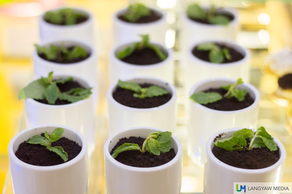 Potted plants? Nope! It's delicious tiramisu
