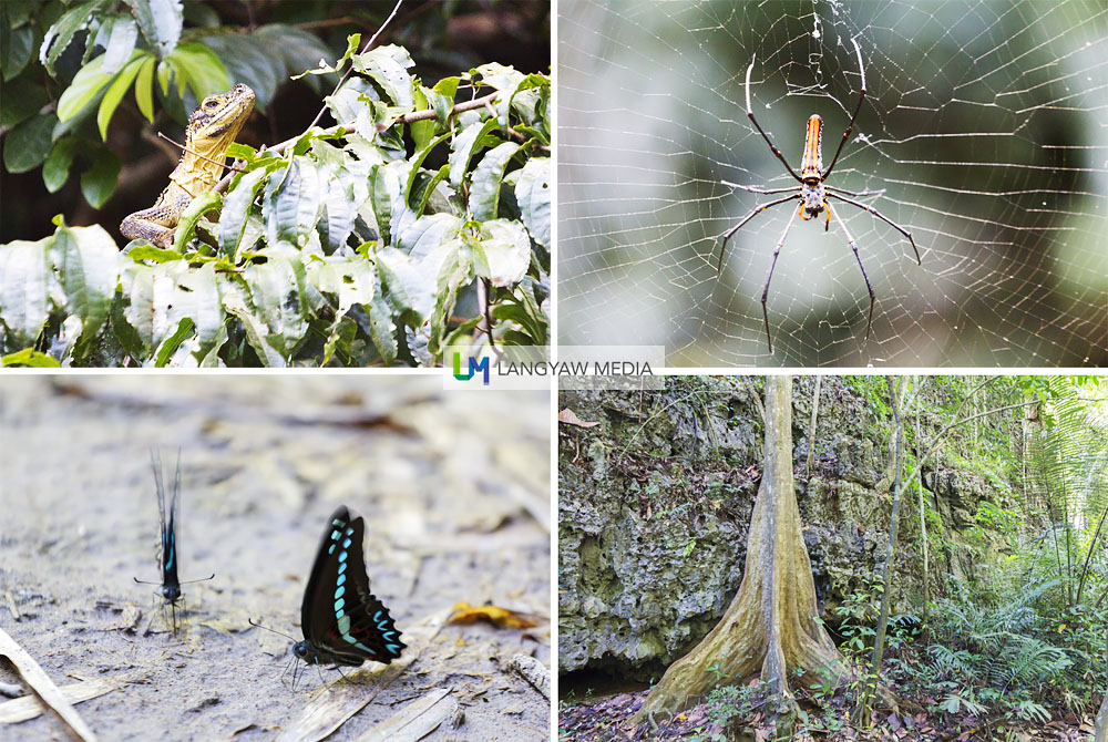 Just a few of the reptiles, arachnids, butterflies and a huge tree found in the national park
