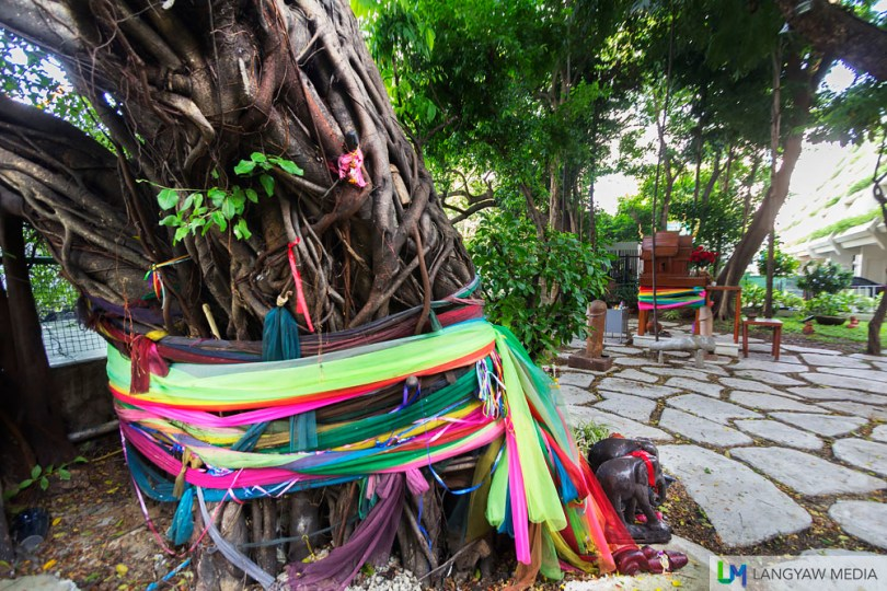 A spirit tree, the biggest in the shrine grounds with colorful ribbons and the wooden figurines of elephants and phallus