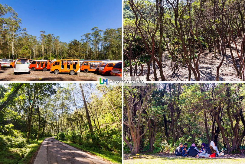 Clockwise from top right: Trees at the edge of the crater lake, family picnic at a wooded area between the crater lake and the parking area, the well paved road leading to the crater lake cuts through this forest, and several angkuts, a type of vehicle popular in Bandung are parked, waiting for their turn to bring visitors to the crater lake