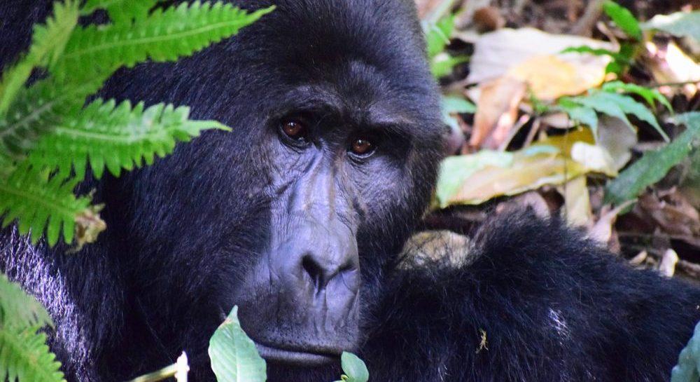 safari in uganda