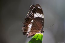 Butterfly shot
