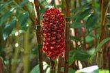 An unusual plant