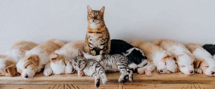 CASTRAR E IMPORTANTE 1024x427 - Castração: vale mesmo a pena castrar seu gato ou cachorro?