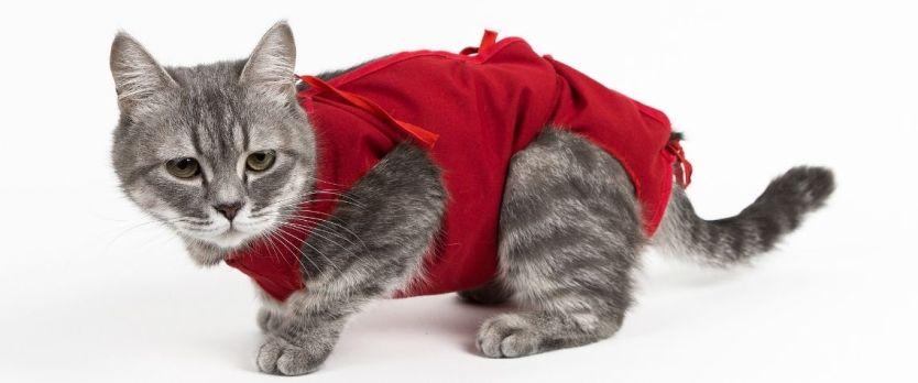 ROUPA DE CASTRACAO 1024x427 - Castração: vale mesmo a pena castrar seu gato ou cachorro?