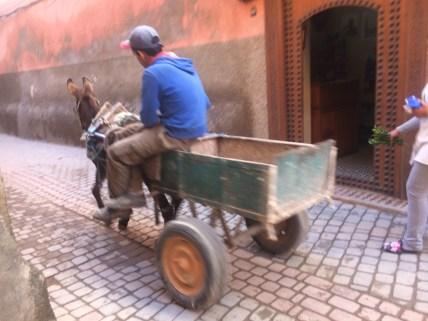 Fast transport through the medina: donkeys. Faster/deadlier: motorbikes.