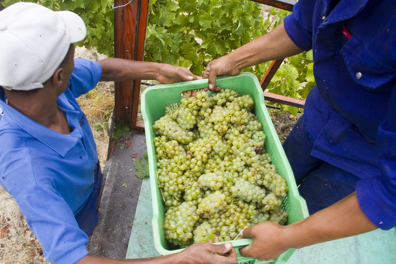 Dos agricultores sosteniendo una cesta de fruta.