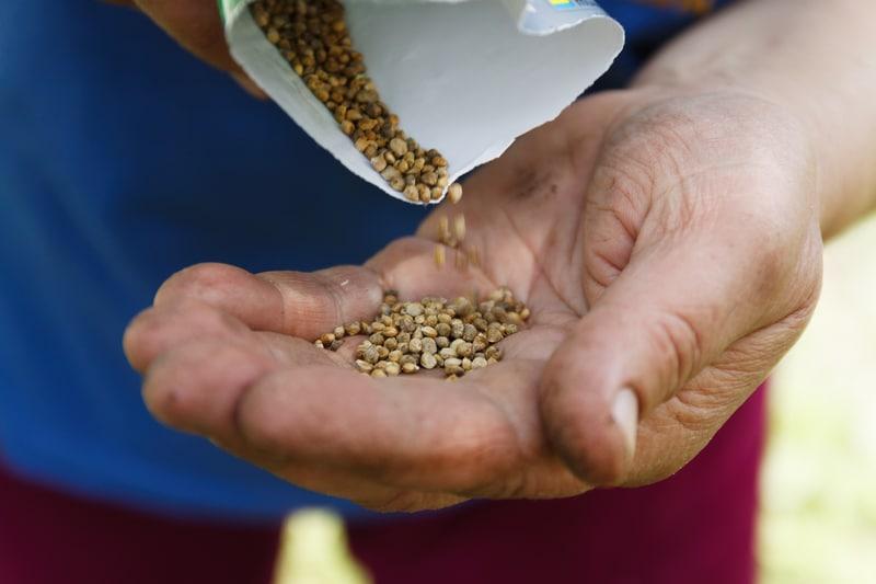 Un jardinero enseñando sus semillas