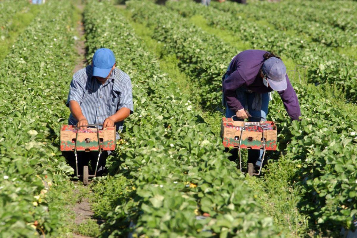 Carolina del Norte uno de los estados que más se beneficia con visas de trabajadores temporales