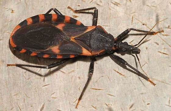 Dan a conocer cómo controlar peligroso insecto en Carolina de Norte