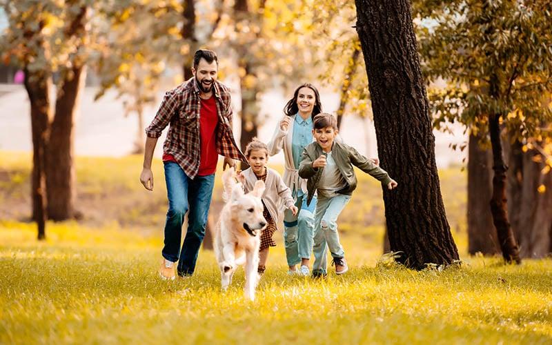 Influencia de las mascotas en la familia
