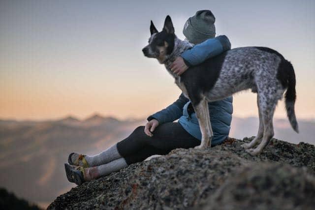 Viaja con tu perro